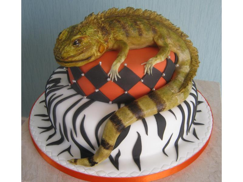 Bearded Dragon cake in chocolate sponge and plain sponge for Danielle's 21st birthday in Blackpool