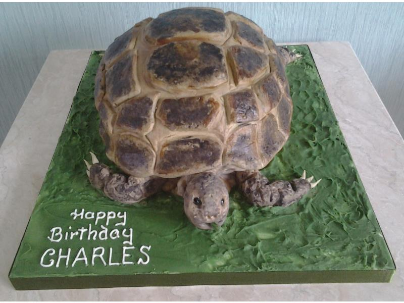Timmy - tortoise cake in chocolate sponge as a surprise for Charles in Southport
